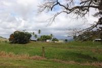 20140813Daintree farm